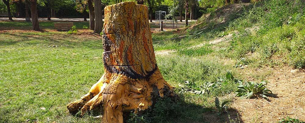 LupoLeonE, decorazione su troncO - franZroom.net